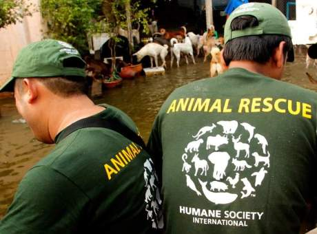 6 Amazing Groups Dedicated to Saving Animals in Disaster Situations
