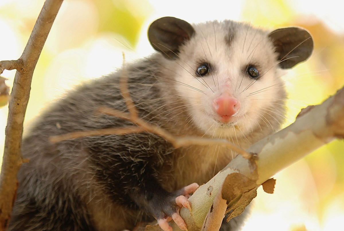 6 Animals You May Encounter in Your Backyard (and What To ...