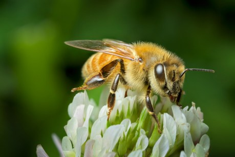 New research shows why bees matter so much to humans