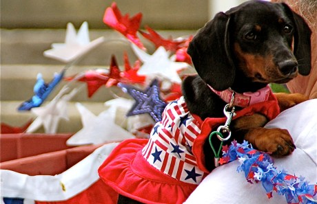 6 Natural Ways to Keep Your Pet Calm on the Fourth of July