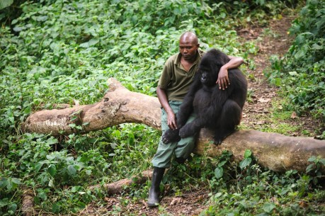 This Image of a Man Consoling an Orphaned Gorilla Will Inspire You to Fight for Our Planet's Survival
