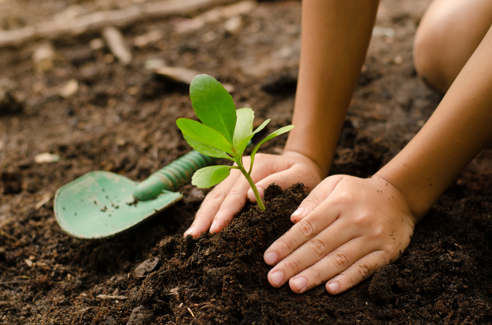How Growing Your Own Food Can Benefit the Planet and Why You Should ...