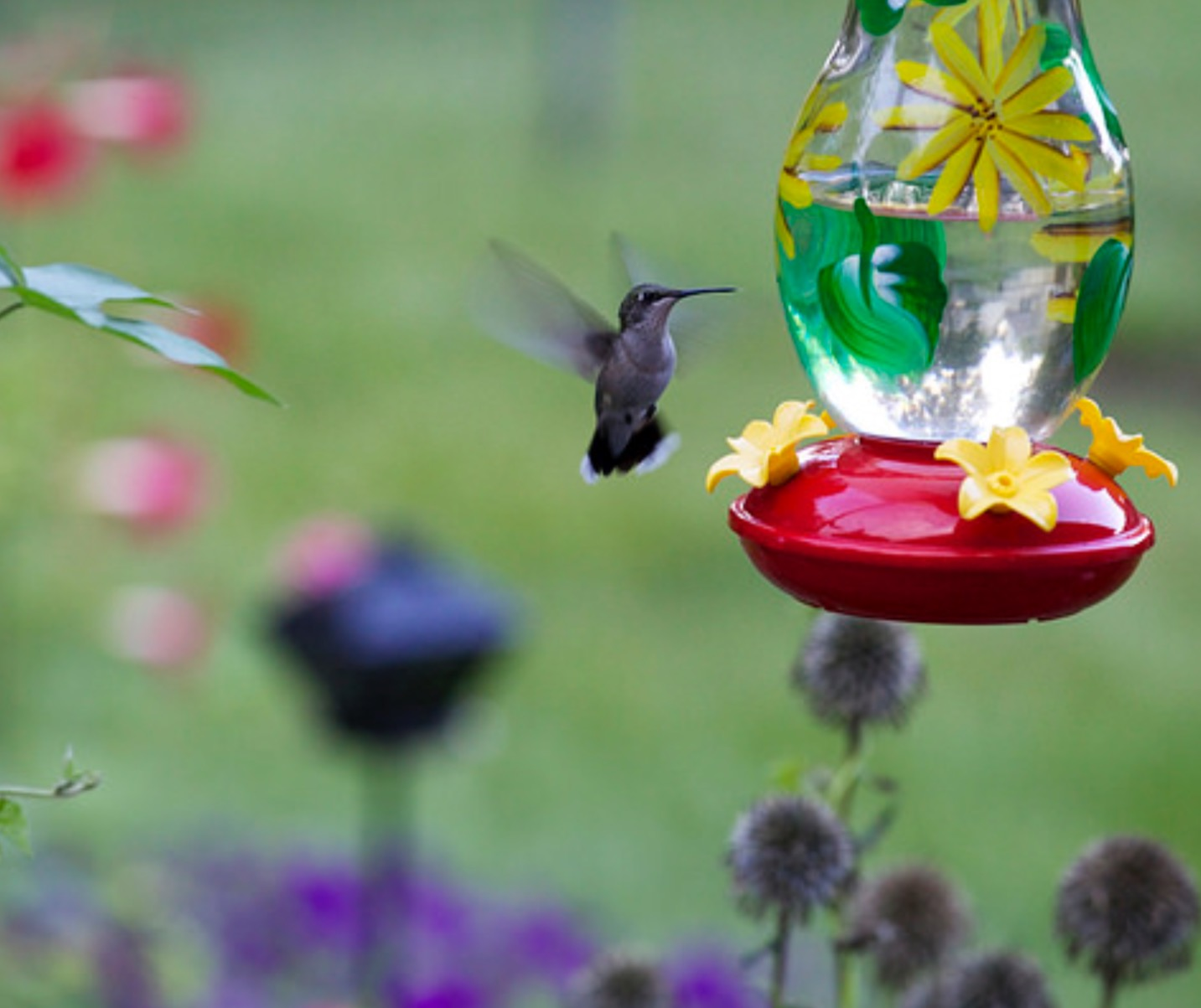 How (and Why) To Attract Hummingbirds To Your Garden