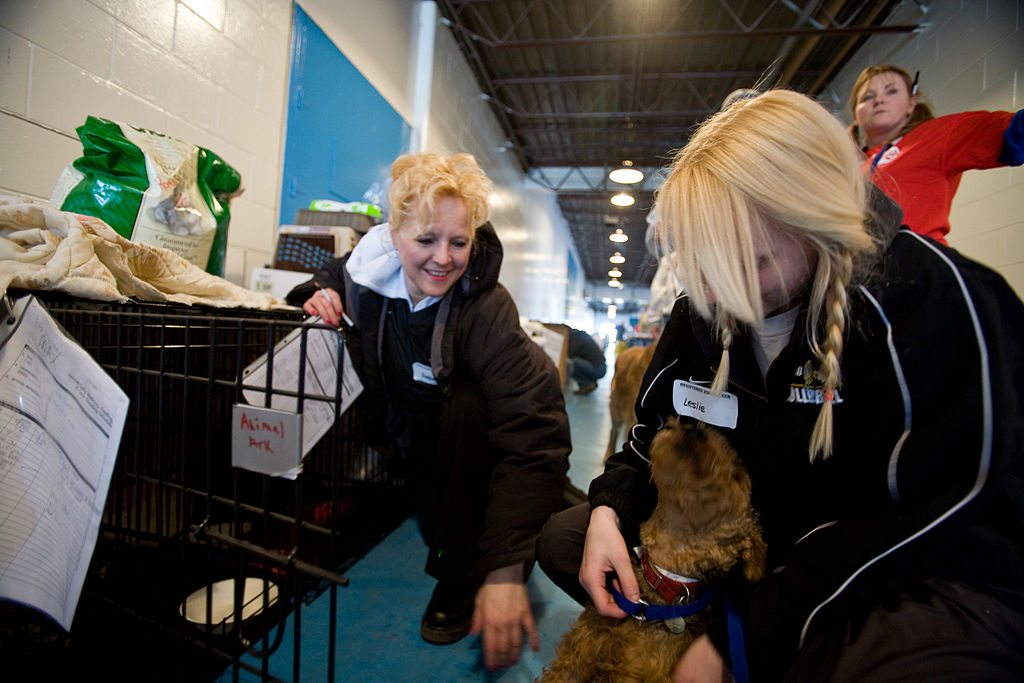 How You Can Help Animal Shelters in the Aftermath of a Natural Disaster
