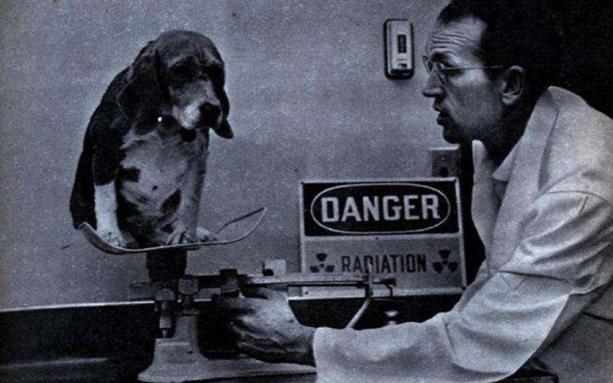 Why Are Beagles Used For Lab Experiments A Look Back At
