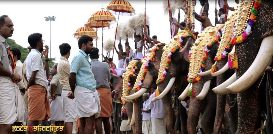 Don't Let the Bright Colors Fool You. These Temple Elephants are Suffering Tremendously