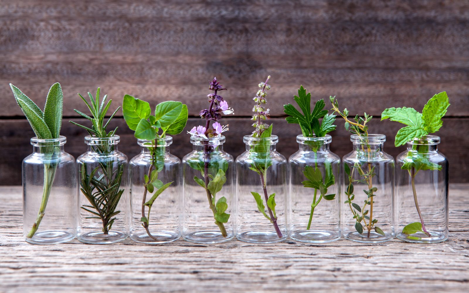 Small glass jars each with a sprig of a different herb