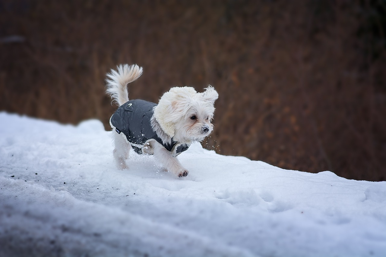 How to Choose the Right Winter Gear for Your Pets