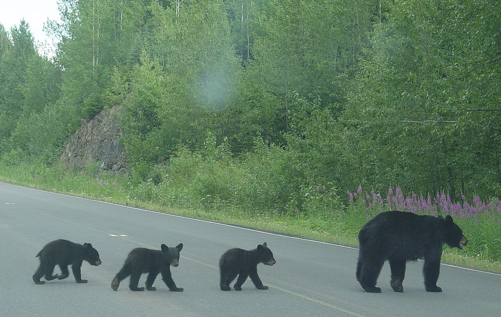How Cities Are Working to Protect Wildlife from Traffic Collisions