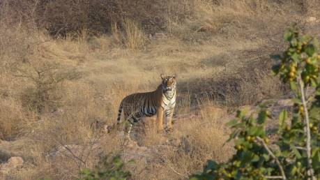 Big Cat Populations Are In Serious Danger and What We Can Do to Help Protect Them