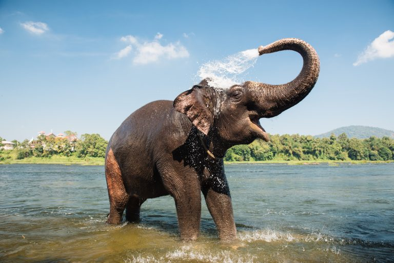 Officials Use Crane to Free Elephant from Well in India