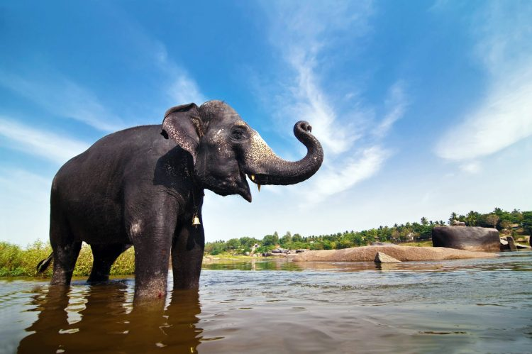 Petition: Eight Year Old Campaigns for India's Elephants
