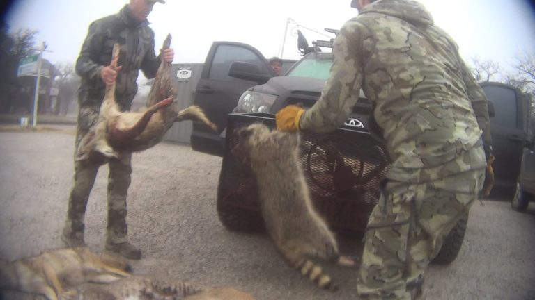 Petition: Chilling Results Revealed from Investigation into Wildlife Killing Contest in Texas