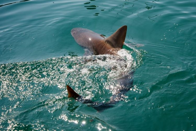 NY Man Arrested for Keeping Sharks in Basement