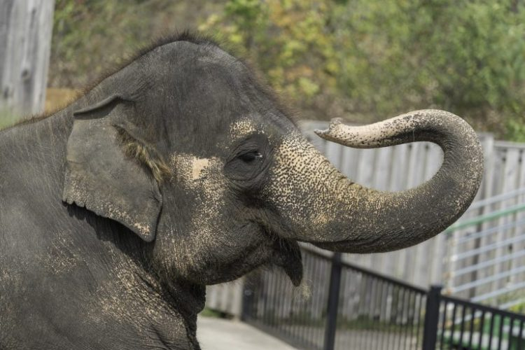 Petition: Send Captive Elephants From World's Worst Zoo to a Sanctuary