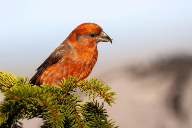 Italian Officials Investigated for Eating Illegal Birds at Secret Dinner