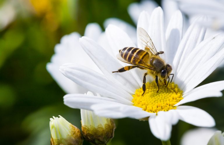 Did You Know Flowers Can Hear Bees Buzzing?