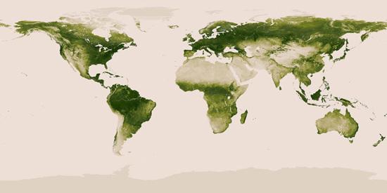 wereldkaart: vegetatie
