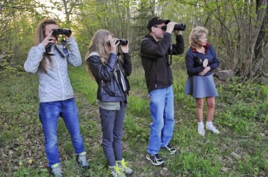 wild spotten in Zweden