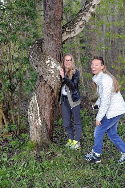 boom in Zweden