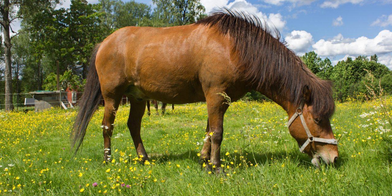 Paardrijden in Zweden? Tips & tricks