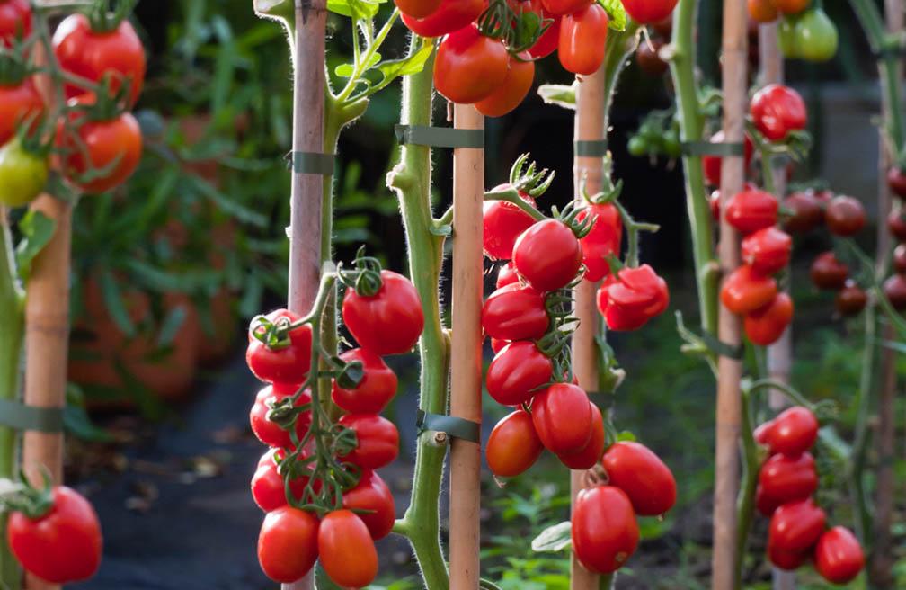 Gazpacho met verse tomaten