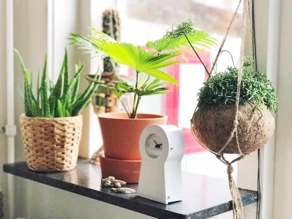 ikea planten en klokje