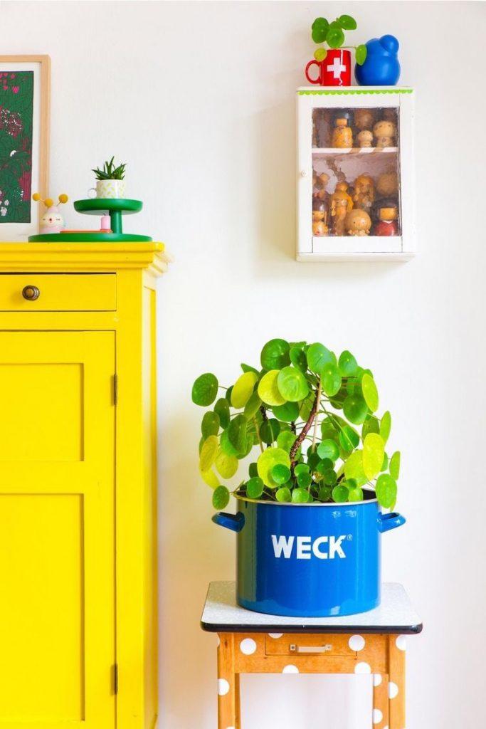 Pannenkoekenplant inspiratie