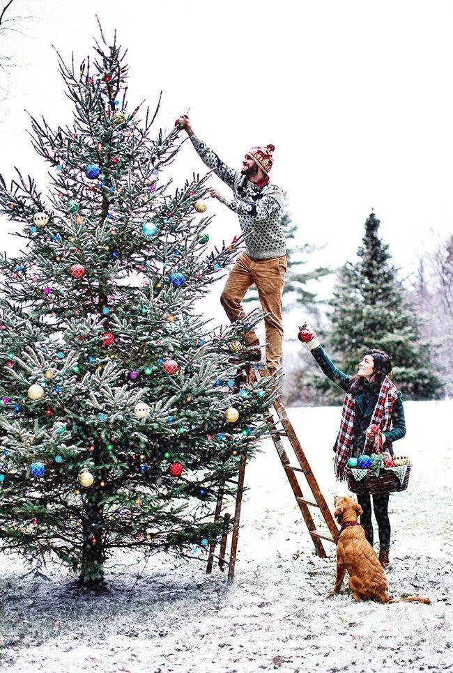 kerstboomtraditie