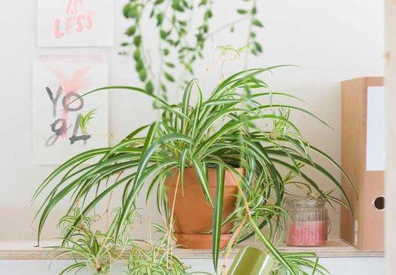 Schone lucht in huis met de graslelie (+ lekker veel inspiratie)