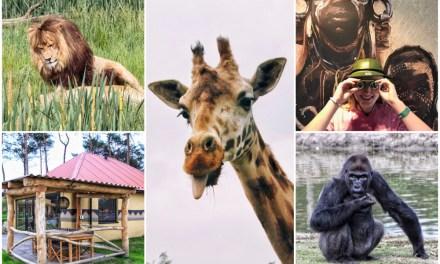 Op safari in Brabant: 5 Beekse Bergen tips