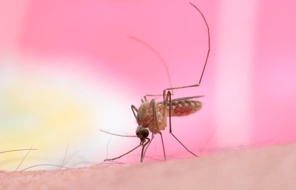 10 tips om jeuk van muggenbulten te verminderen