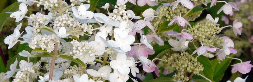 Lijst met tuinplanten voor vlinders en bijen