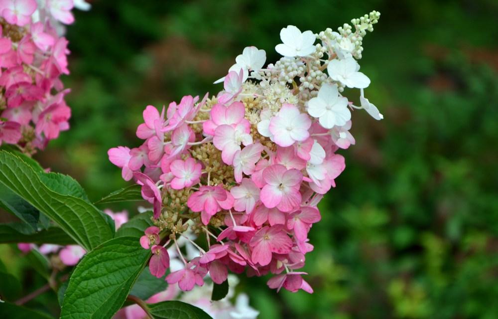 Lijst met tuinplanten waar bijen en vlinders blij van worden