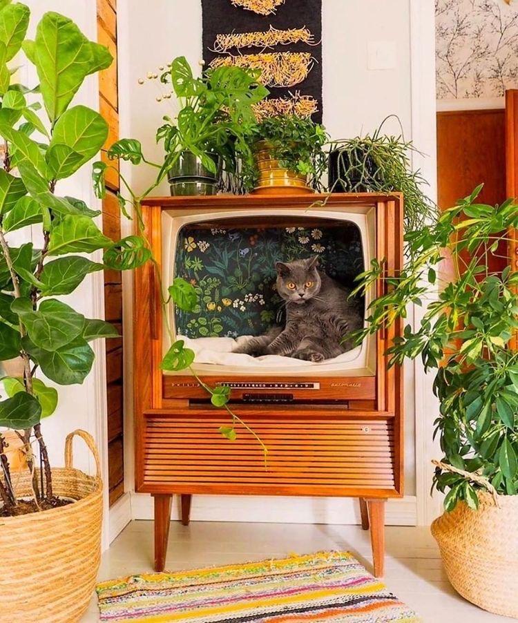 kattenhuisje in oude tv