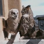 Owl cam pic2