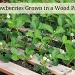 Update – How to Turn a Pallet into a Garden