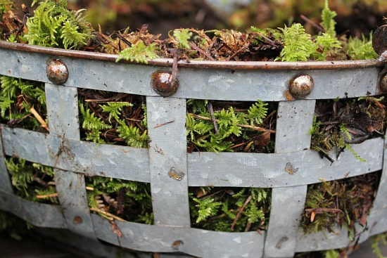 garden basket moss