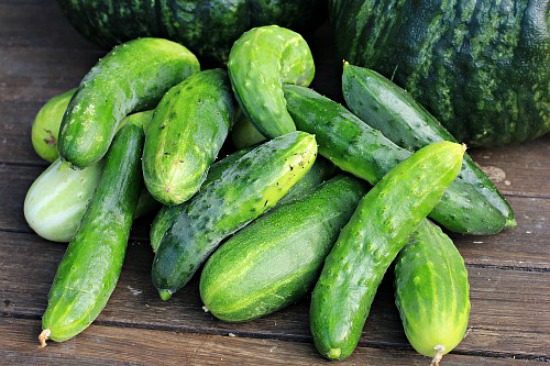 burpless-cucumbers