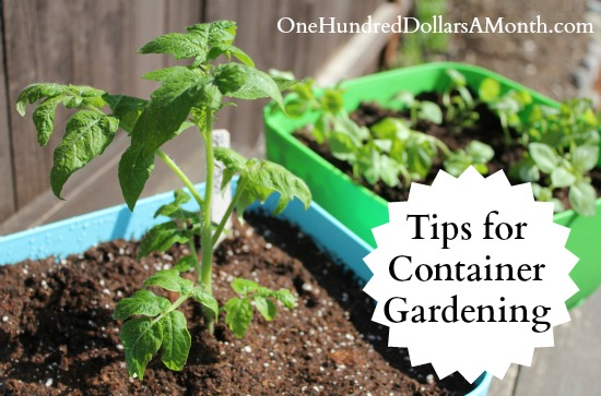 tips for container gardeningjpg
