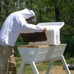 Information on Top Bar Bee Hives with Pictures
