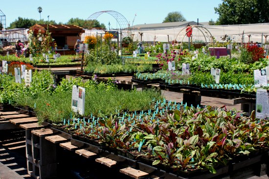 Annie's Annuals and Perennials California