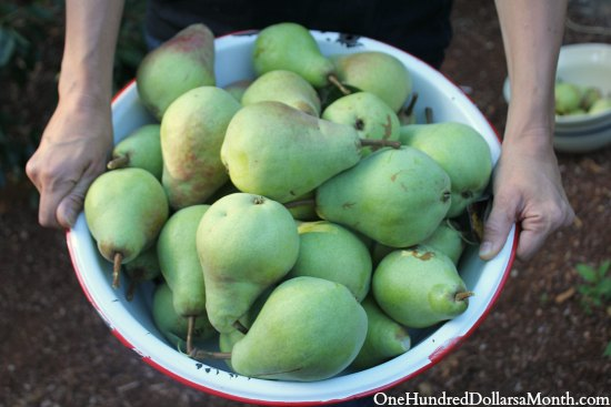 basket of pears