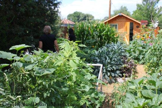 curtis garden beds