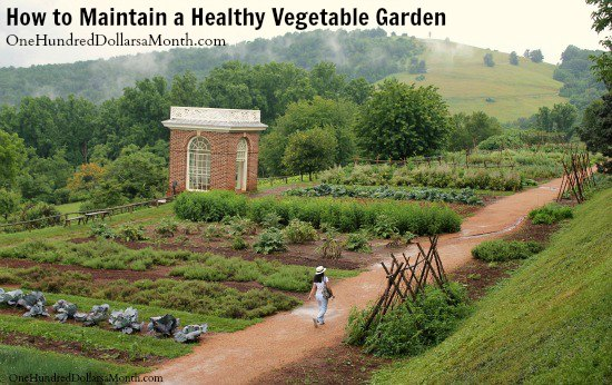 How to Maintain a Healthy Vegetable Garden