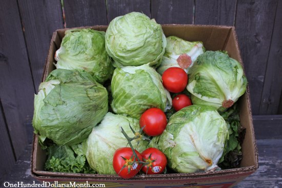 lettuce tomatoes food waste