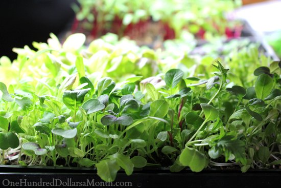 seedlings grow lights
