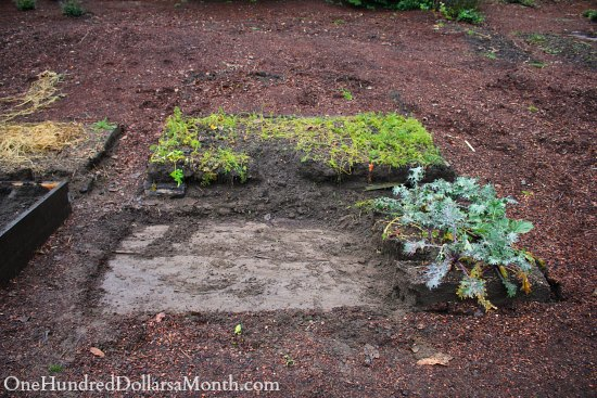 raised garden beds kale
