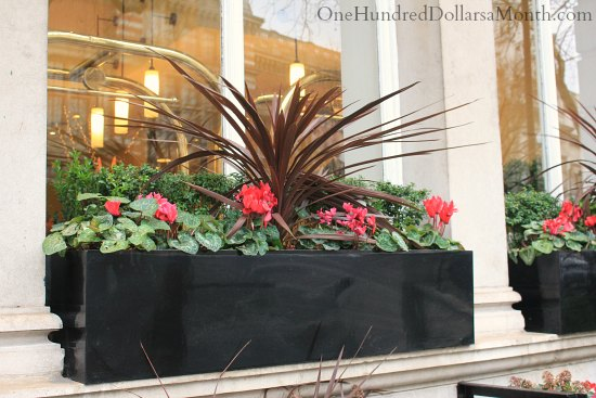 Window Box Ideas For Late Winter And Early Spring One