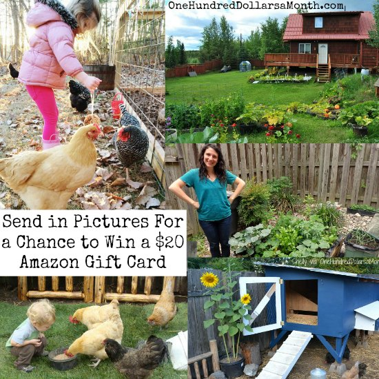 Send Pictures of Your Garden For a Chance to Win a $20 Amazon Gift Card